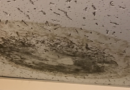 Resident hall mold a growing concern for students