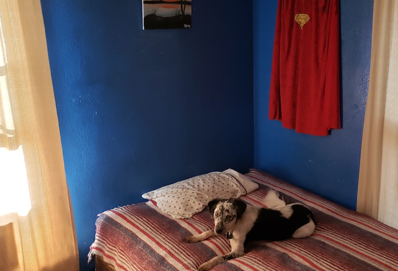 Tony Mendoza's favorite spot in his room, including his dog, Pond. He lives off campus with 3 roommates.